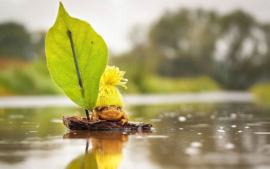 cute-toads-animal-photography-gabi-stickler