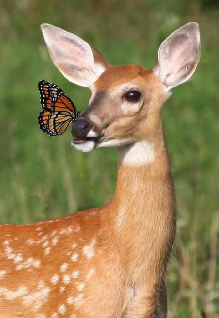 Bambi With Butterfly