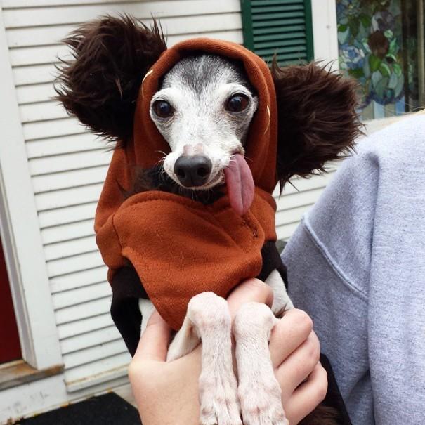 derpy-dog-greyhound-sticking-tongue-zappa-2