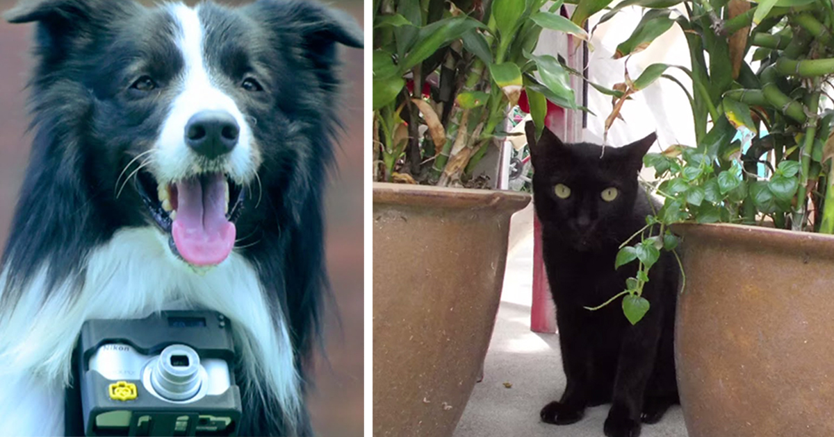 World's First 'Phodographer' Dog Uses Heart Rate Monitor That Snaps Pics When He Gets Excited