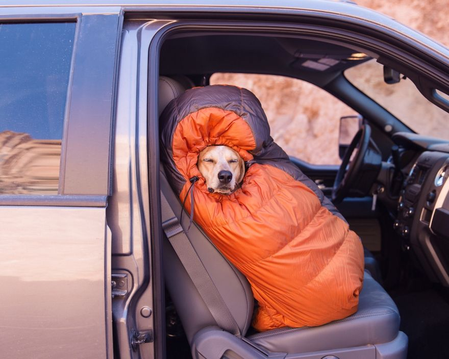 dog-traveling-car-motorcycle-maddie-on-road-1