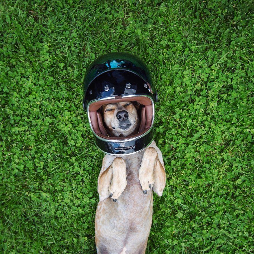 dog-traveling-car-motorcycle-maddie-on-road-2