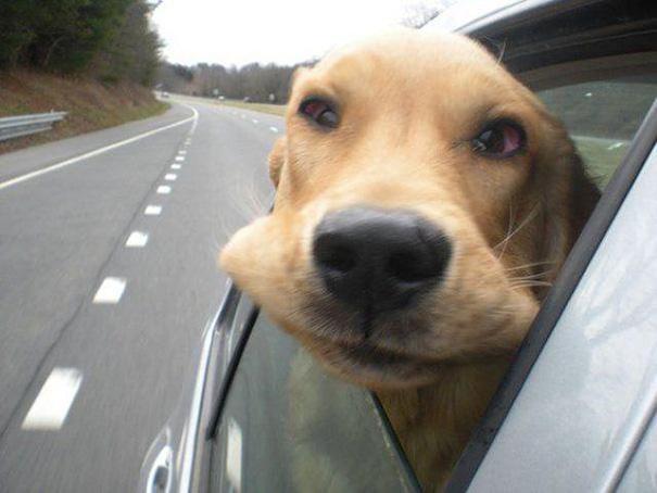 Dog Vs. Wind
