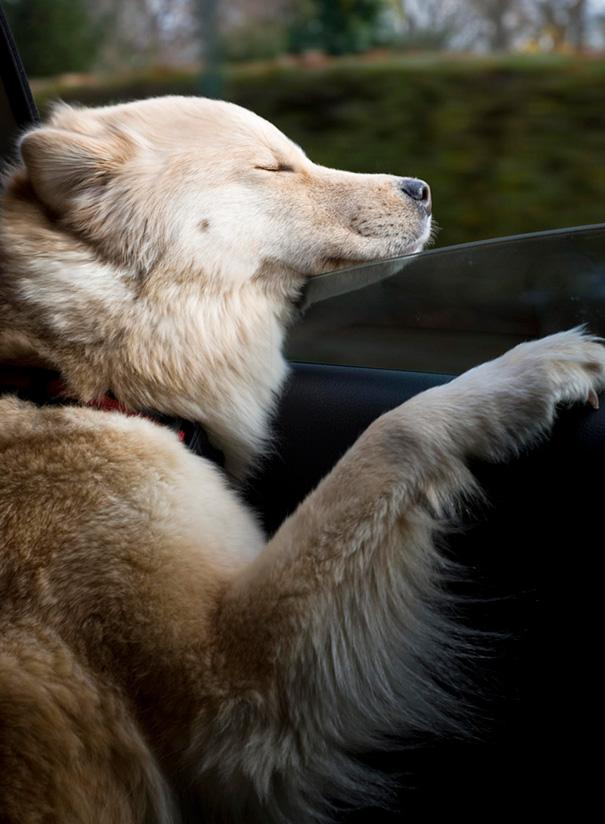 Ayla Enjoying A Drive