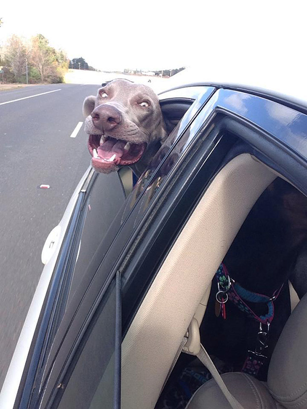 My Friend's Dog Loves Car Rides