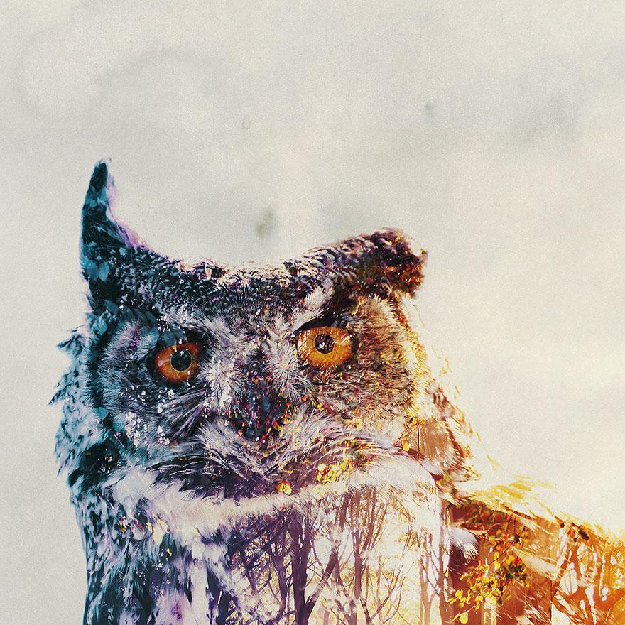 Double-Exposure Animal Portraits By Norwegian Photographer   Bored ...
