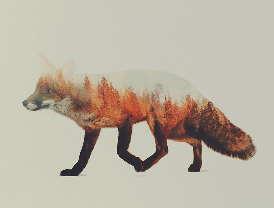 double exposure animal portraits by norwegian photographer bored panda. Black Bedroom Furniture Sets. Home Design Ideas