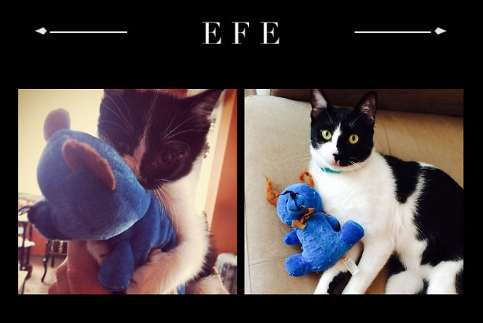 """efe"" Still Playing His Bear =)"