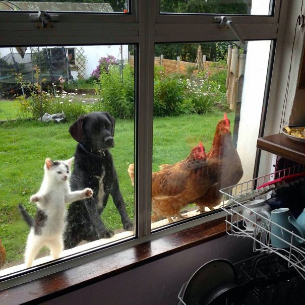 http://static.boredpanda.com/blog/wp-content/uploads/2015/05/funny-animal-outside-door-let-me-in-20__605.jpg