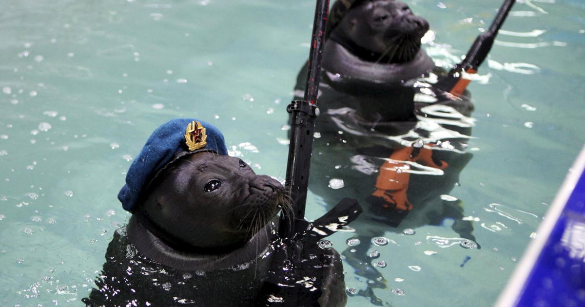 funny-military-seals-wwii-victory-day-ru