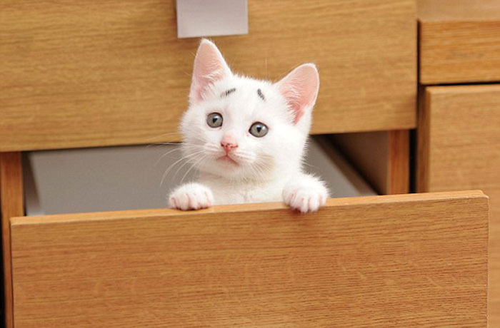 8-Week-Old Kitten Born With Permanently Worried-Looking Eyebrows