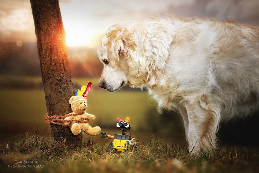 golden-retriever-mali-teddy-bear-gabi-stickler-7