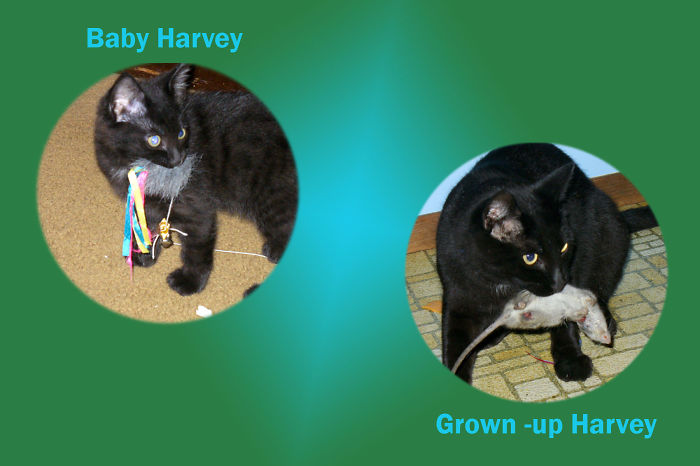 Harvey The Great Hunter - Then And Now