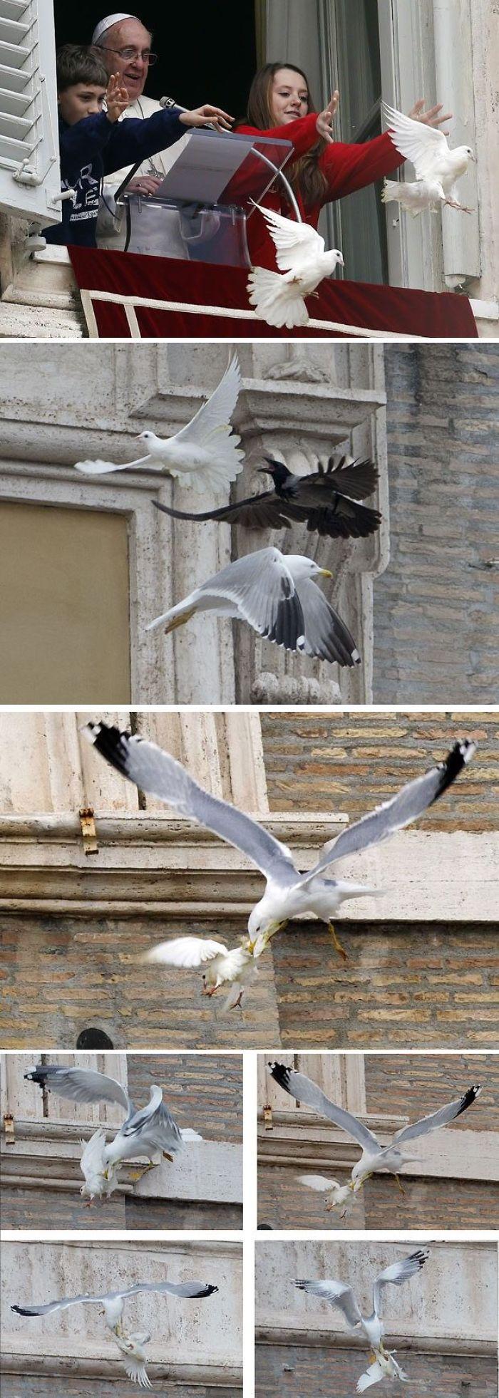 Holy Seagulls