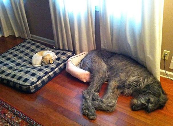 Big Dog Feels Small
