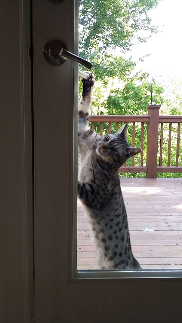 I'm Ready To Come In Now!