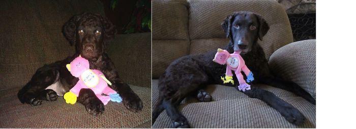 Qwik N A Puppy Toy :-)
