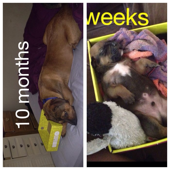 Troy And His Box 10 Months Apart!