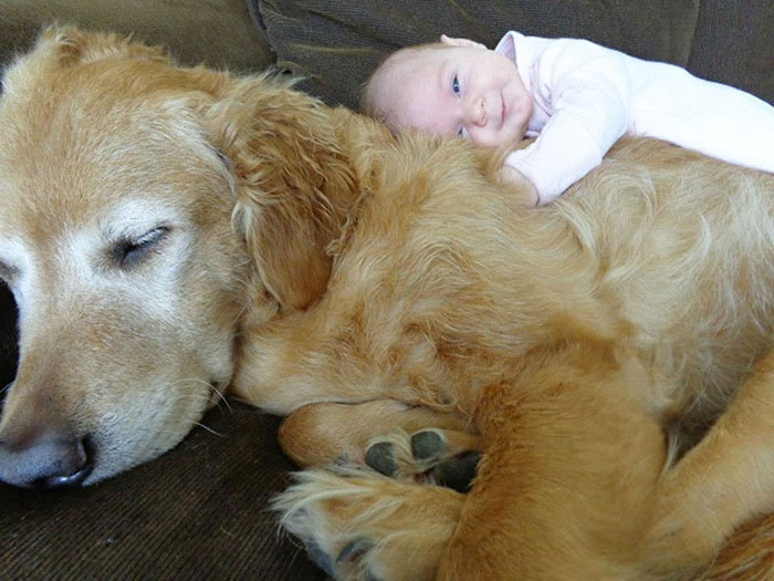 Big Dog With A Baby