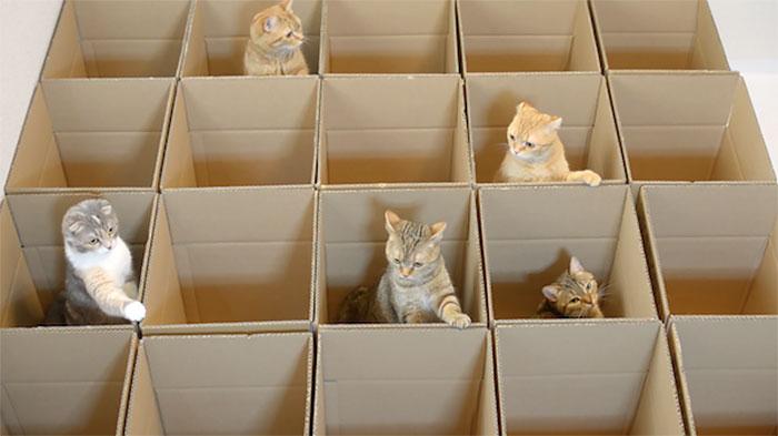lucky-cats-enjoy-cardboard-maze-their-human-servant-made-for-them-1
