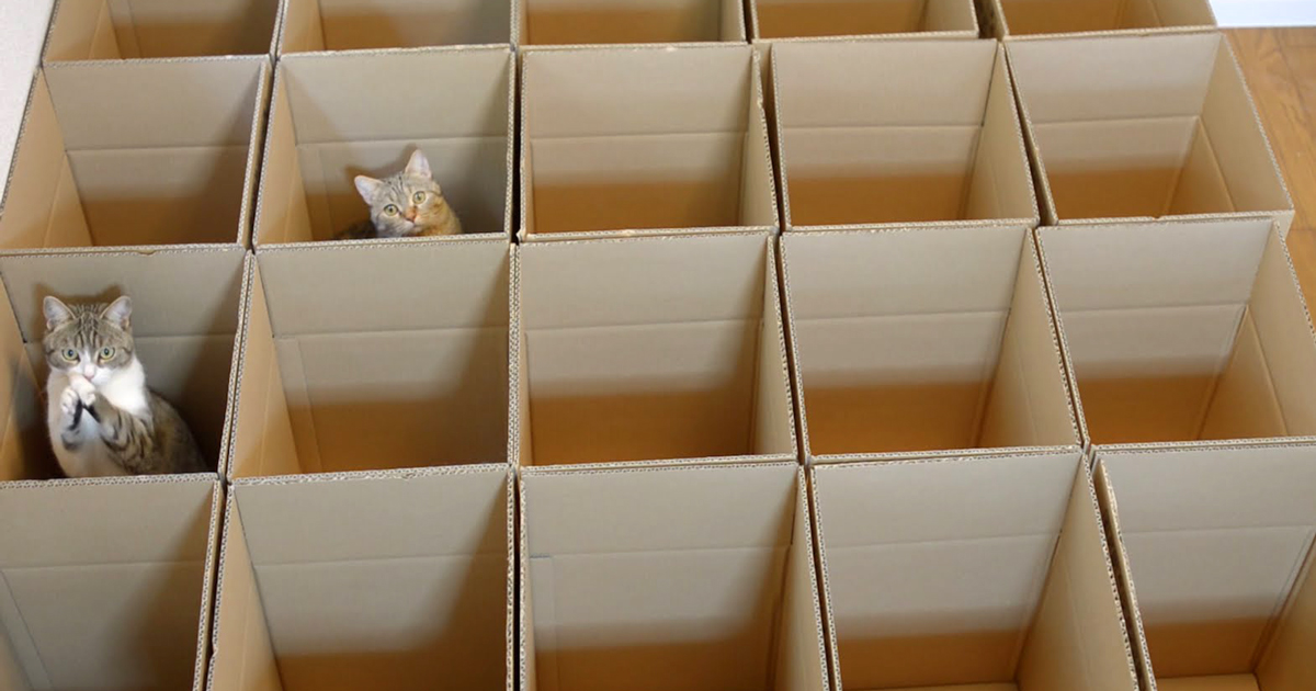 9 Cats Enjoy Cardboard Maze Their Human Servant Made For