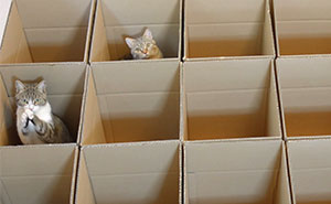 9 Cats Enjoy Cardboard Maze Their Human Servant Made For Them