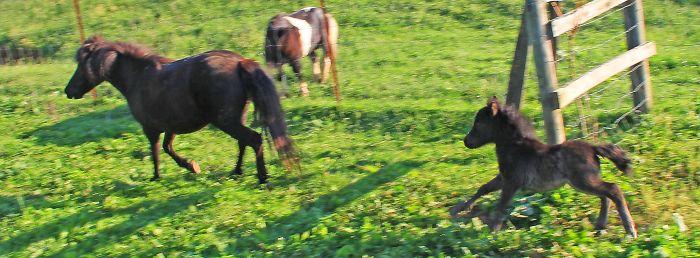 Mini Horse Nay-bors