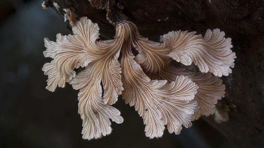 mushroom-photography-steve-axford-1