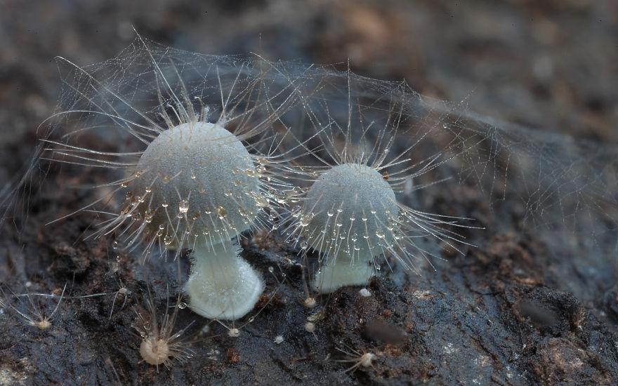 mushroom-photography-steve-axford-12