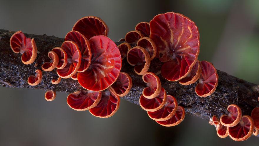 mushroom-photography-steve-axford-2