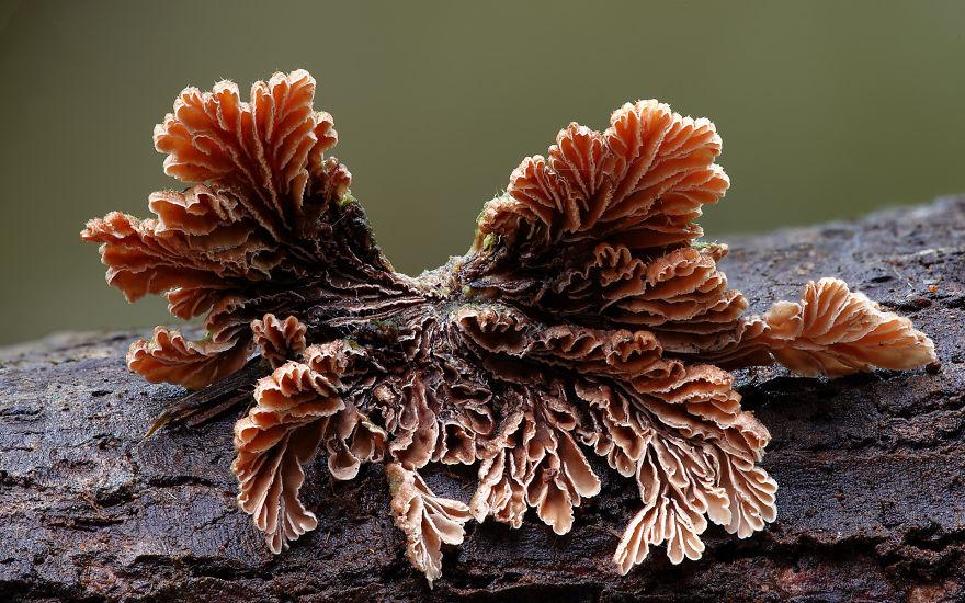 mushroom-photography-steve-axford-24