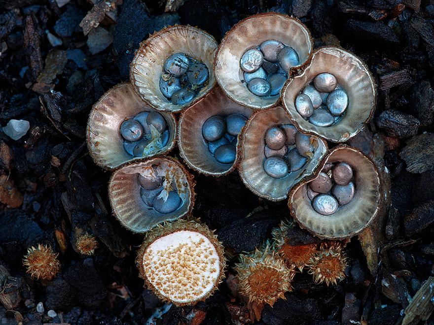 mushroom-photography-steve-axford-7