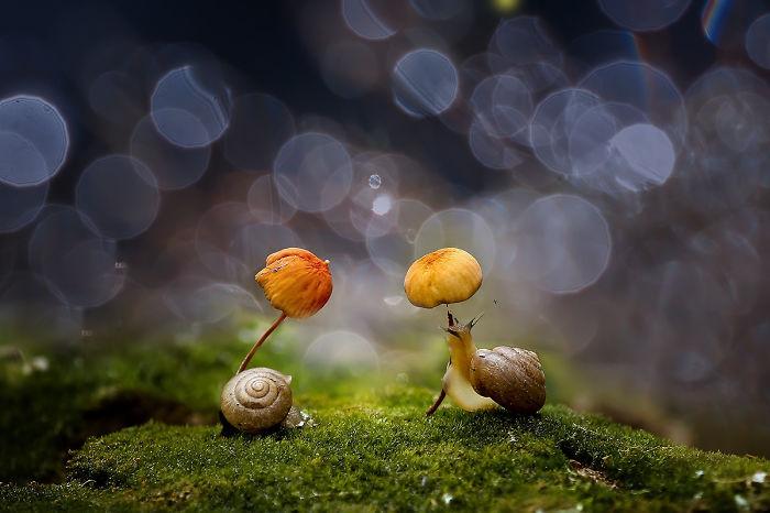 Mushroom Umbrella