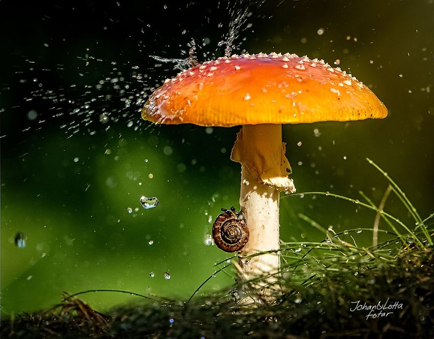 http://static.boredpanda.com/blog/wp-content/uploads/2015/05/natural-umbrella-shelter-rain-animal-photography-1__880.jpg