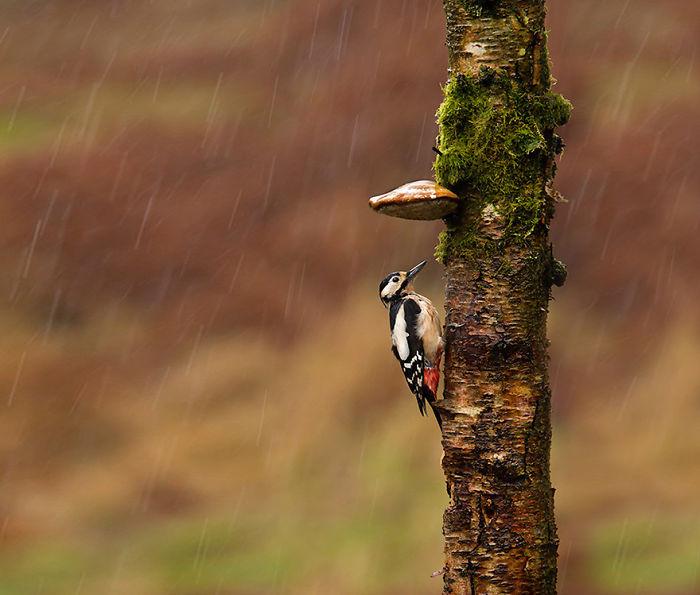 Lichen Umbrella