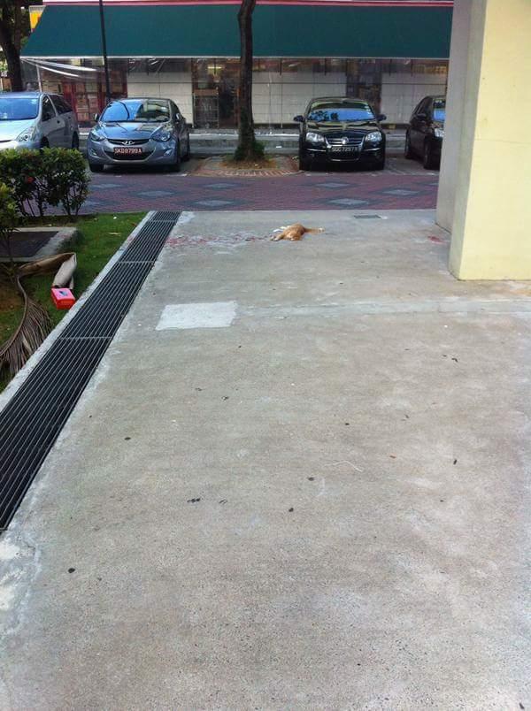 optical-illusion-paint-cat-bleeding-1