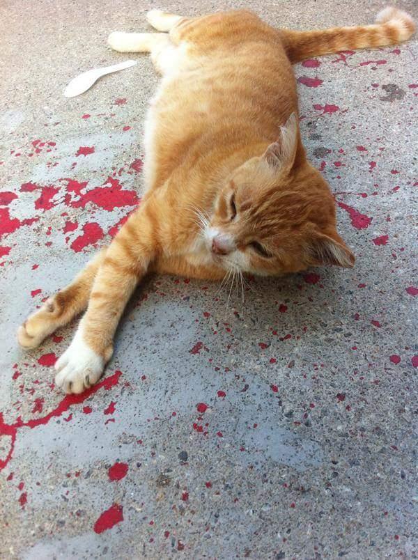 optical-illusion-paint-cat-bleeding-3