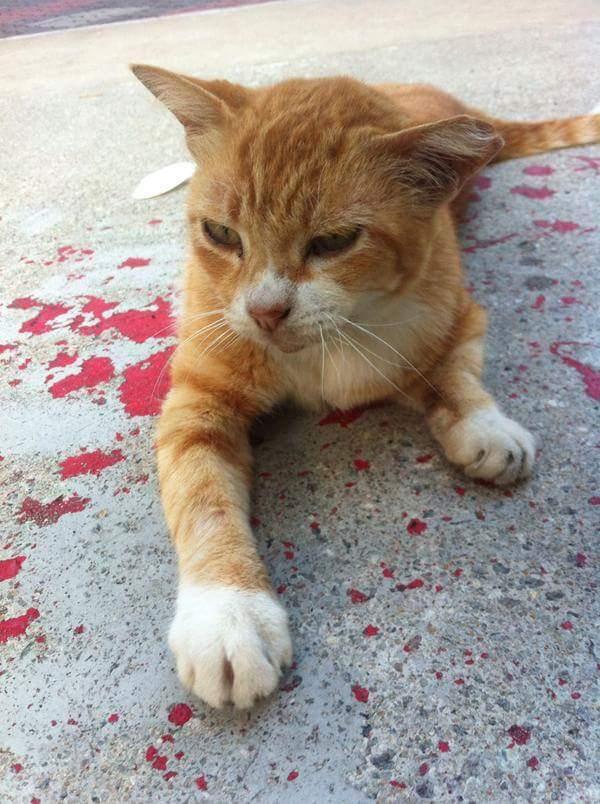 optical-illusion-paint-cat-bleeding-4