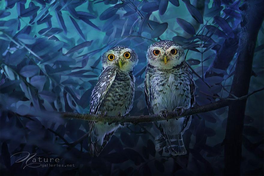 owl-photography-sasi-smit-6