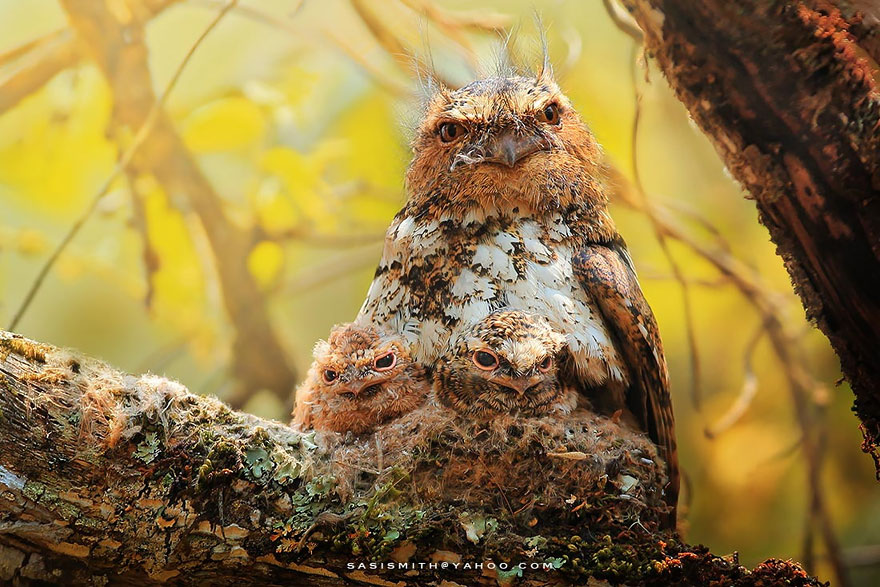 owl-photography-sasi-smit-9