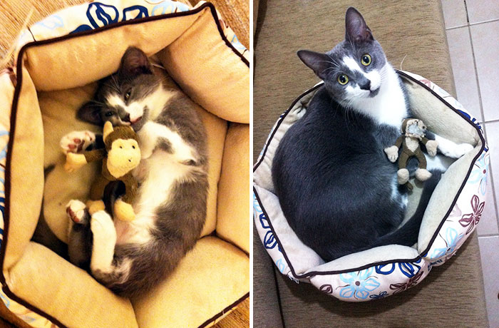 The Difference A Year And A Half Makes, For Both My Cat And His Toy Monkey