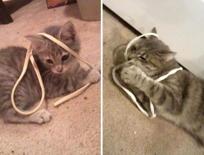 Stevie The Kitty, The Day We Got Her, To Today. She Still Loves Her String
