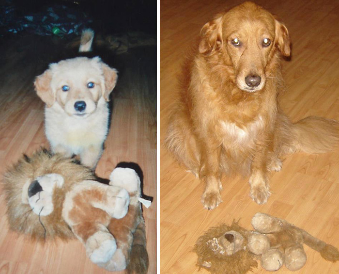 Mayo, My Friend 's Dog, Then And Now