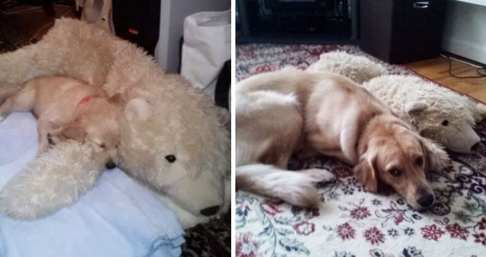 One Year Later And He Still Loves To Cuddle With This Stuffed Polar Bear
