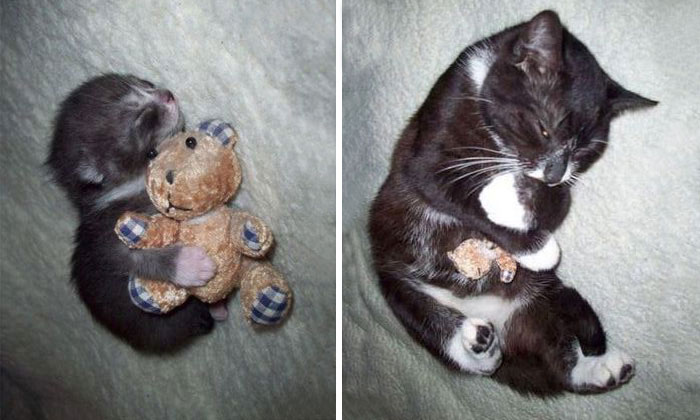 23 Before-And-After Photos Of Pets Growing Up With Their Toys