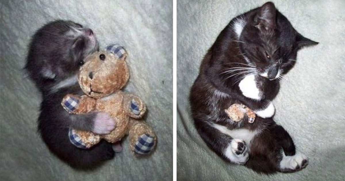 10 before and after photos of pets growing up with their toys bored panda - Gardening for pets ...