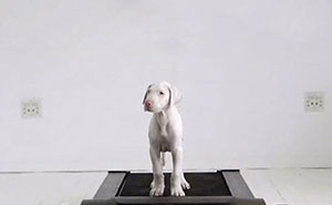Time-Lapse Of My Rescued Puppy Growing Up On A Treadmill