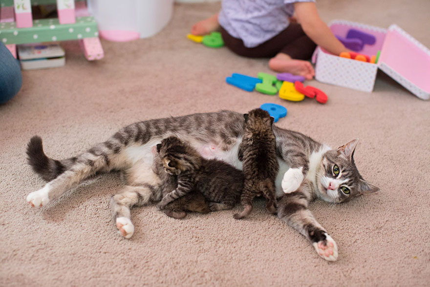 sad-mother-cat-lost-kittens-adopted-mikey-texas-3