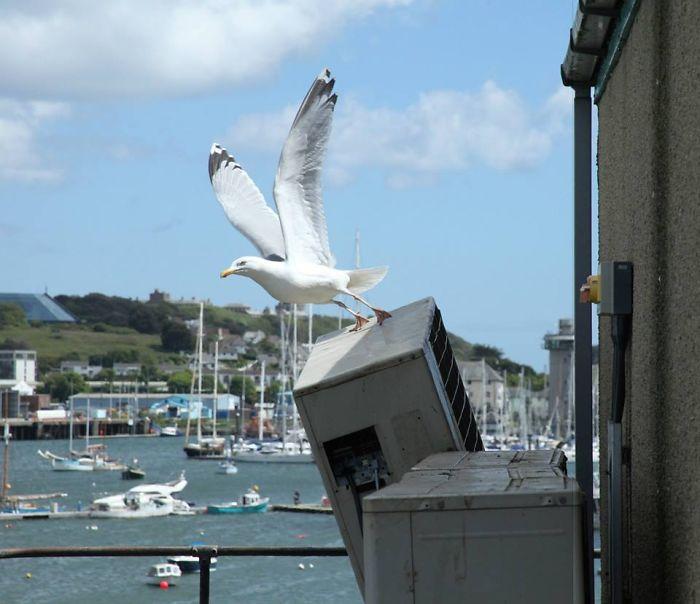 Seagull Destruction
