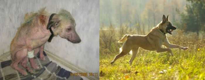 40 Pictures Of Rescue Animal Transformations Before And After